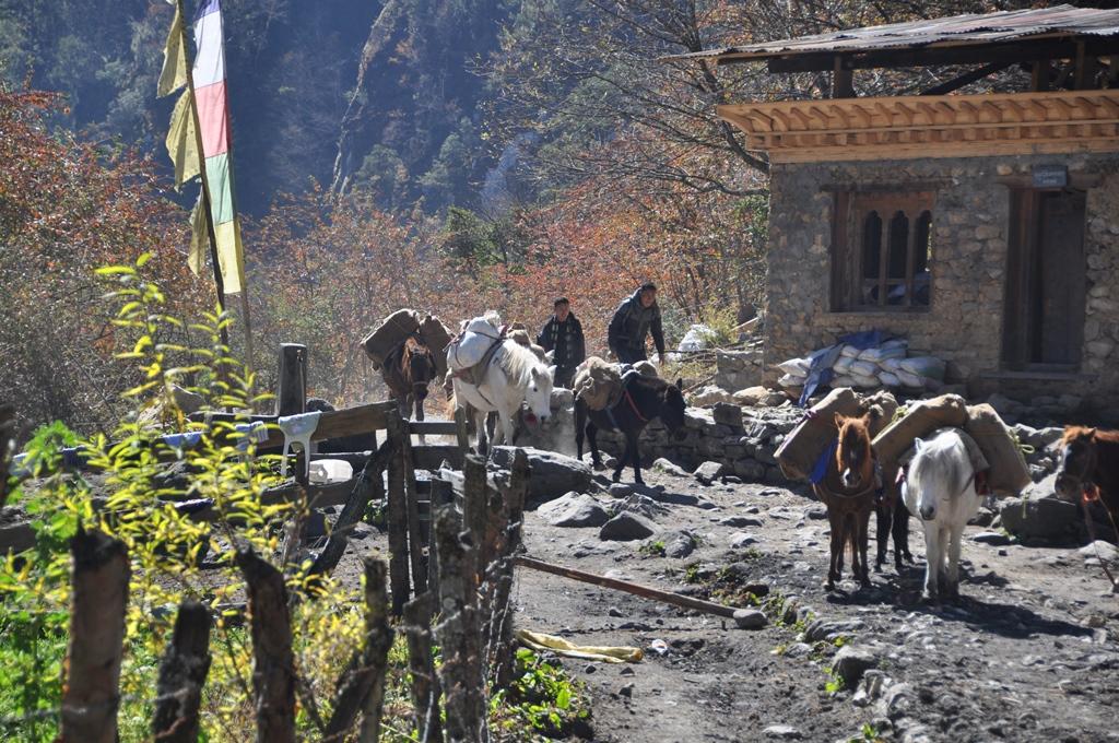 De Druk pad trek - Bhutan - Atma Asia Travel