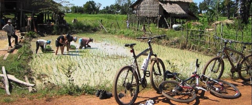 De omgeving van Phnom Penh - Cambodja - Atma Asia Travel