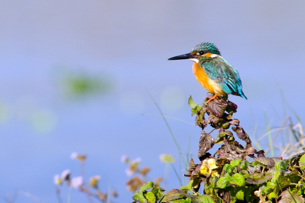 Koshi Tappu Wildlife Reserve - Nepal - Atma Asia Travel