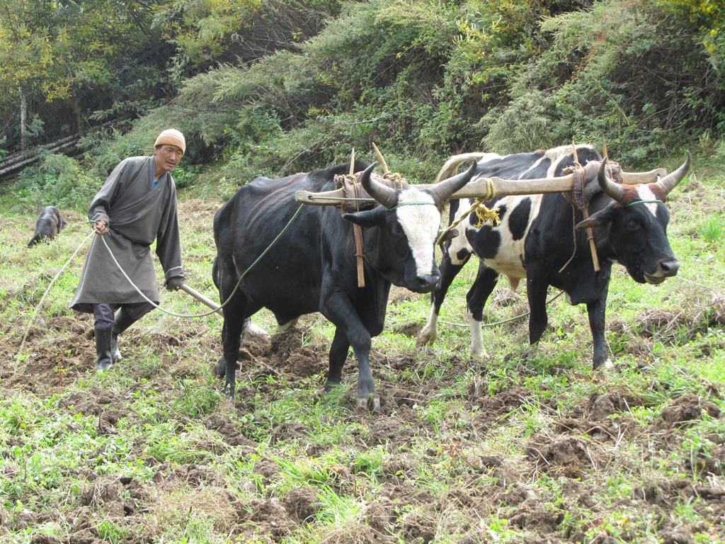 Overnachten bij de lokale bevolking - Bhutan - Atma Asia Travel