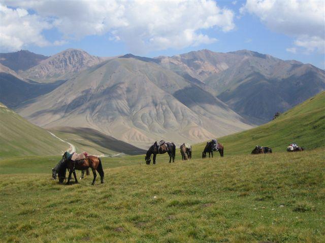 Paardrijden in Kyrgyzstan - Kyrgyzstan - Atma Asia Travel
